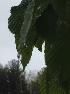 More Rainy Weather!