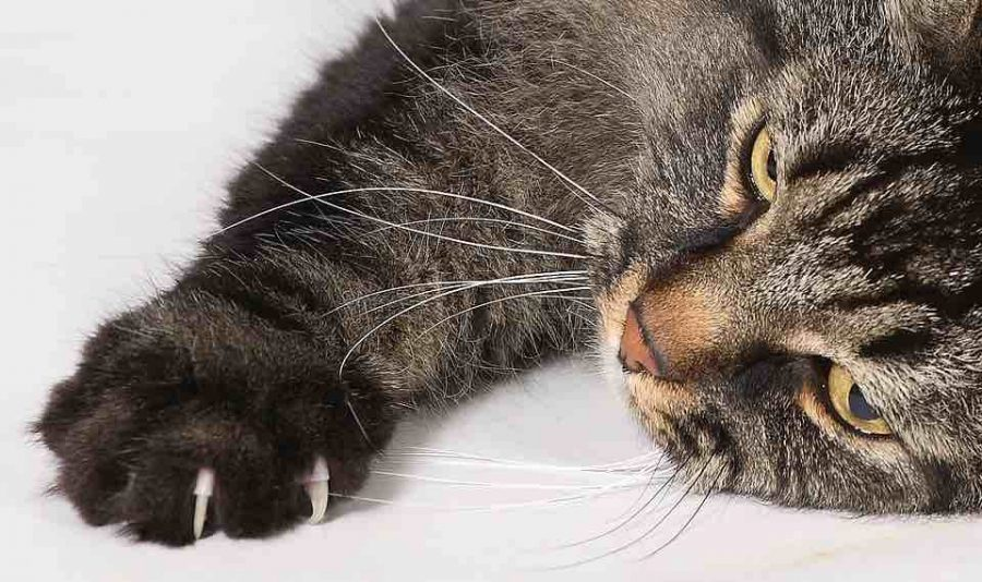 Cat Declawing has been banned in Denver!
