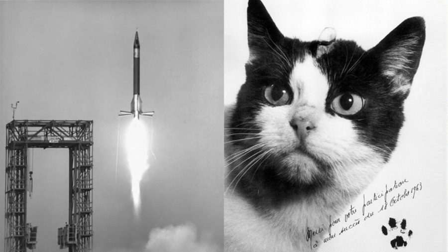 Félicette, the first cat in space