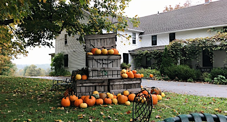 Clearview Farms: The One Stop Spot for All Your Fall Activities