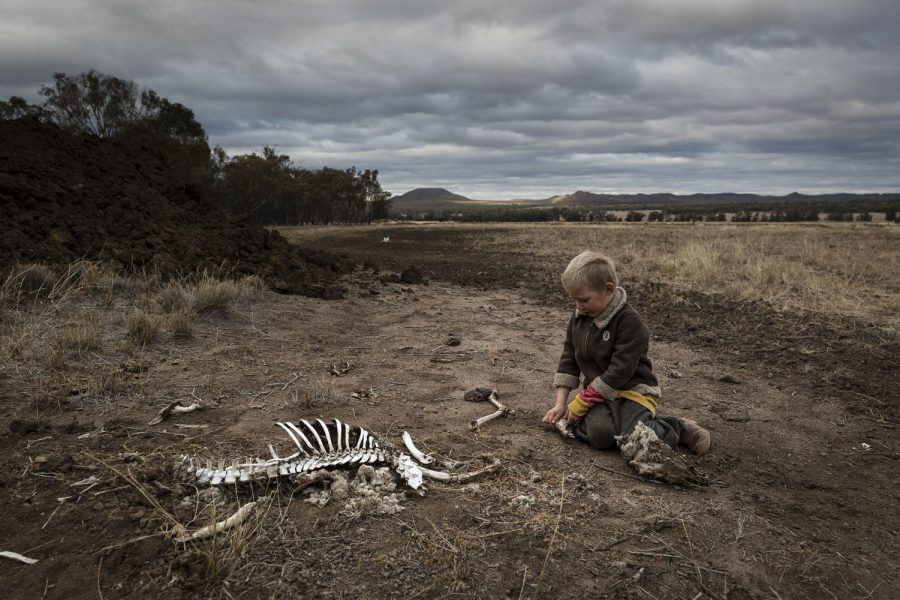Little boy playing with the bones of dead livestock in Australia, which has faced severe drought.