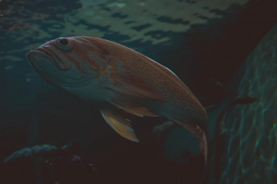 animal-fish-swimming-214078