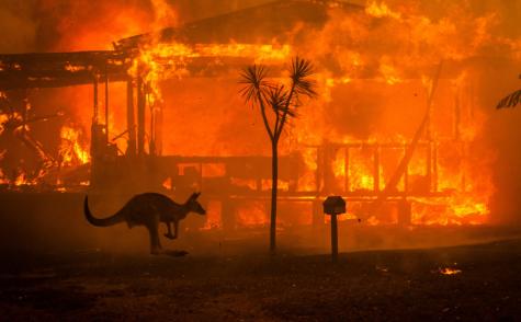 Wildfires Ravage Australia, Destroying Native Wildlife Populations