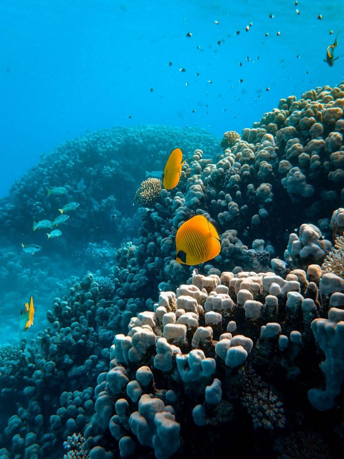New Coral Reef Discovered As Part of The Great Barrier Reef